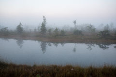Beautiful tranquil landscape of misty swamp lake Stock Image
