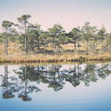 Beautiful tranquil landscape of misty swamp lake Royalty Free Stock Photography