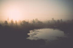 Beautiful tranquil landscape of misty swamp lake Royalty Free Stock Photos