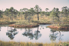 Beautiful tranquil landscape of misty swamp lake Stock Image