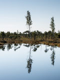 Beautiful tranquil landscape of sunny swamp lake Royalty Free Stock Photography