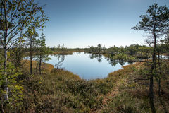 Beautiful tranquil landscape of sunny swamp lake Royalty Free Stock Photos