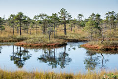 Beautiful tranquil landscape of sunny swamp lake Stock Photos