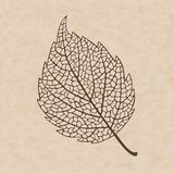 Beautiful transparent autumn leaf. Beautiful  elegance transparent  autumn leaf Stock Photo