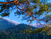 Autumn and winter in the mountaines. Beautiful autumn-winter mountain landscape Stock Photos