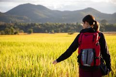 Beautiful traveler woman with backpack on rice fields in Thailand stock photos