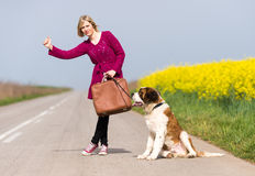 Beautiful traveller girl. Girl with a dog hitchhike Stock Photo