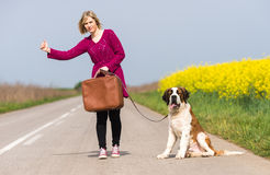 Beautiful traveller girl. Girl with a dog hitchhike Royalty Free Stock Images