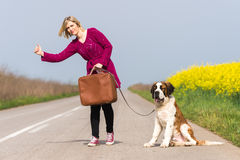 Beautiful traveller girl. Girl with a dog hitchhike Royalty Free Stock Image
