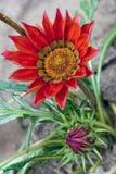 Beautiful treasure flower stock photo