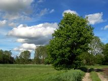 Beautiful tree. The image shows a beautiful tree, which has a country lane on its right side. In the background of the picture are some more trees. Left of the royalty free stock image