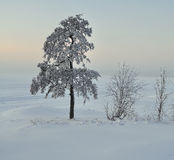 Beautiful tree Royalty Free Stock Image