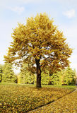 Beautiful tree Royalty Free Stock Photography