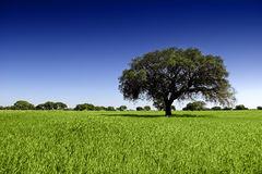 Beautiful tree Royalty Free Stock Photos
