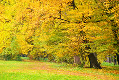 Beautiful tree in autumn park Royalty Free Stock Photos