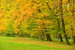 Beautiful tree in autumn park Stock Photo