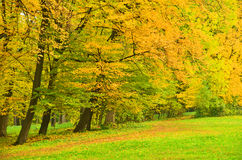 Beautiful tree in autumn park Stock Photography