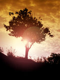 Beautiful tree back lit against sunset. Beautiful tree back lit against an orange sunset in a tranquil place Royalty Free Stock Image