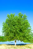 Beautiful tree. On a background the small river Stock Photos