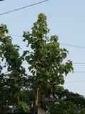 Beautiful tree in Bangladesh stock photo