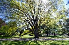 Beautiful tree, beautiful day Royalty Free Stock Photos