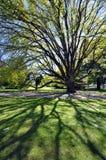 Beautiful tree, beautiful day Royalty Free Stock Photography