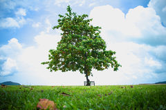 Beautiful tree with bench in summer Royalty Free Stock Photography