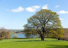 Beautiful tree Blagdon Lake Somerset England UK south of Bristol Stock Photos