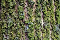 Beautiful Tree body on Isolated Background Royalty Free Stock Images