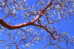 Beautiful Tree Branch Royalty Free Stock Photography