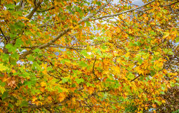 Beautiful tree branch in autumnal forest Stock Image