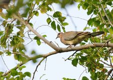 A beautiful in a tree branch Royalty Free Stock Photos