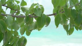 Seychelles. Praslin Island. Beautiful tree branch with green leaves in the foreground. Seascape with blurred white yacht. Beautiful tree branch with green leaves stock video footage