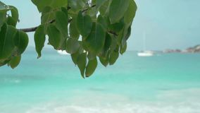 Seychelles. Praslin Island. Tree branch with green leaves in the foreground. Seascape with blurred white yacht on the. Beautiful tree branch with green leaves in stock video