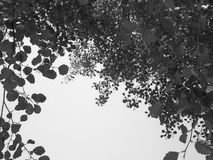 Beautiful tree branches aspect. Beautiful tree branches detail - summer Royalty Free Stock Photo