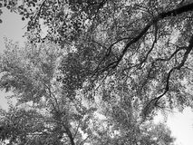 Beautiful tree branches aspect. Beautiful tree branches detail - summer Royalty Free Stock Image