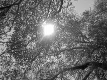 Beautiful tree branches aspect. Beautiful tree branches detail - summer Stock Image