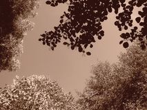 Beautiful tree branches aspect. Beautiful tree branches detail - summer Stock Images