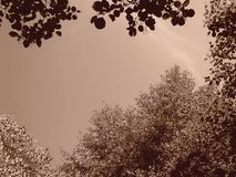 Beautiful tree branches aspect. Beautiful tree branches detail - summer Stock Photos