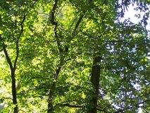 Beautiful tree branches aspect. Beautiful tree branches detail in summer time Stock Photography