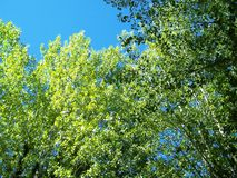 Beautiful tree branches aspect. Beautiful tree branches detail in summer time Stock Photos