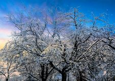 Blue Sky Over Tree Branches Covered With Snow stock photos