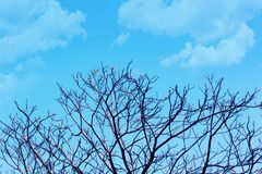 Beautiful Tree branches without leaf in spring against blue cloudy sky background. Stock Photo