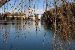 Beautiful Tree Branches Photographed in front of a Calm Lake. A closeup of nature during the spring. Beautiful tree branches photographed in front of a calm lake stock photography