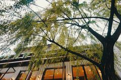 Beautiful tree beside the building royalty free stock photography