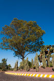 Beautiful Tree and Cactuses in Mexico City. Near Teotihuacan on the entrance Stock Photography