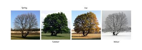Beautiful tree caught in the four seasons. Collage royalty free stock photography