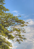 Beautiful tree and clouds made by hdr technic Royalty Free Stock Photography