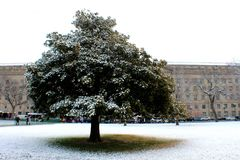 Beautiful tree downtown D.C. Lovely tree covered such beautiful snow in Washington DC royalty free stock photos