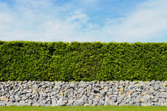 Beautiful tree fence,green field and stone with blue sky and clo Royalty Free Stock Photography